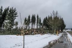 11. Februar 2007