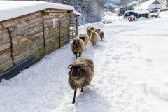 Lengenbeck im Winter 23