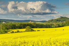 Rapsfeld bei Laer mit Blick auf Meschede und Abtei Königsmünster 2