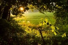 naturfenster-029