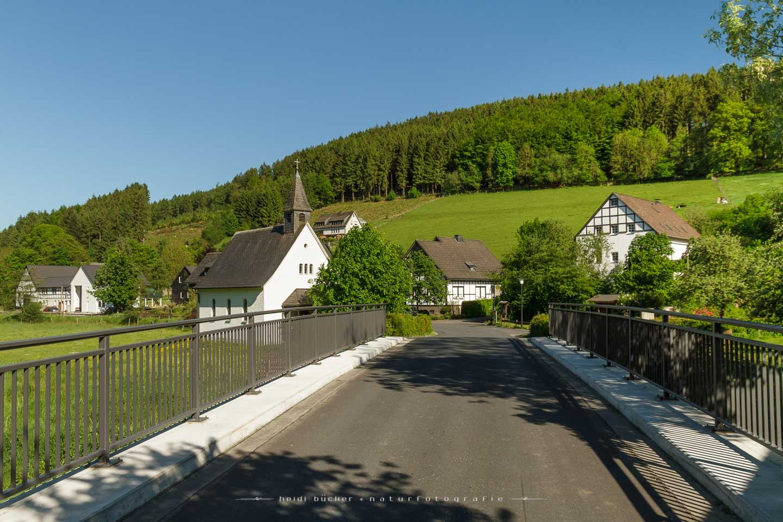 sallinghausen-01