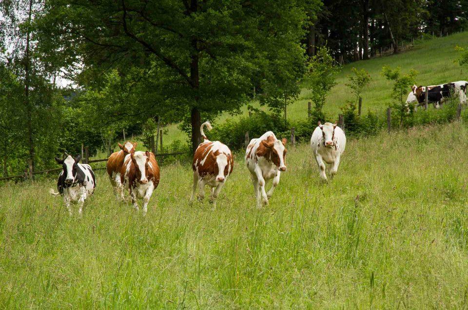 Herzbauern im Hochsauerland