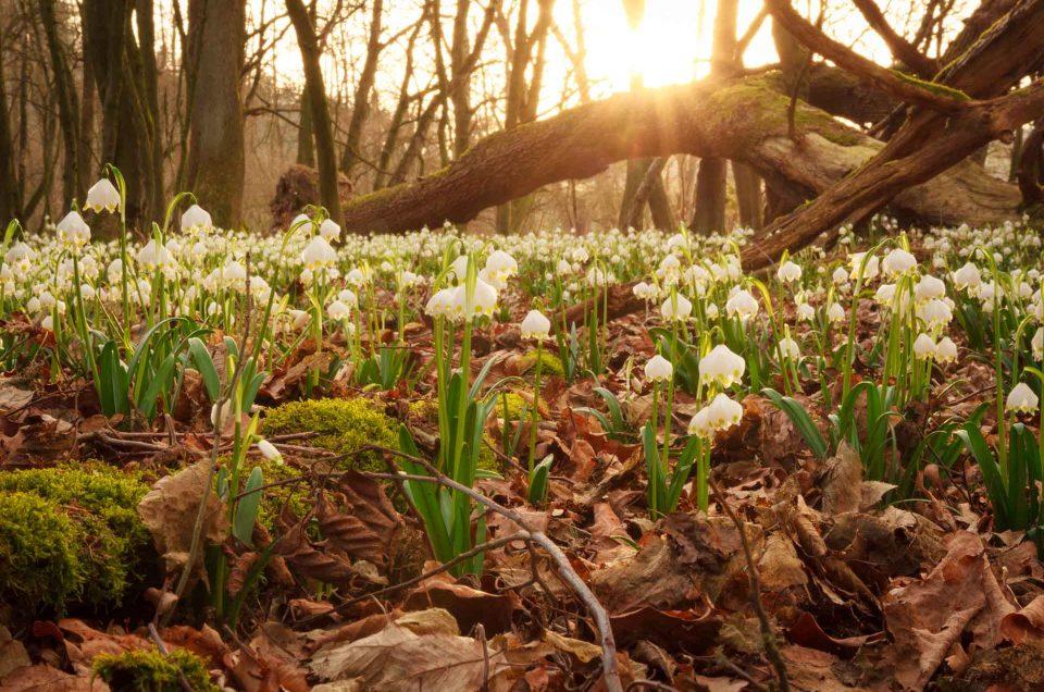 Magische Orte in der Natur