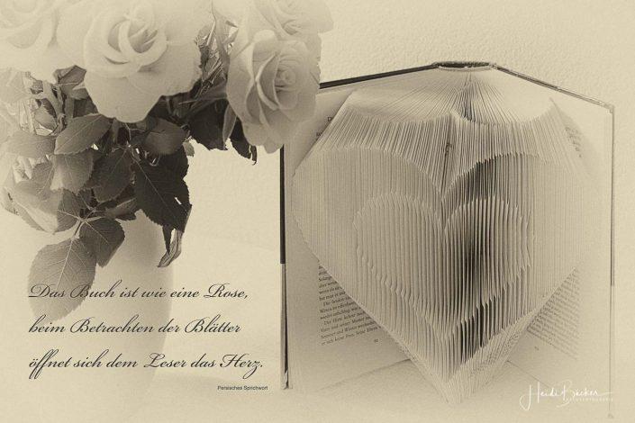 Das Buch ist wie eine Rose