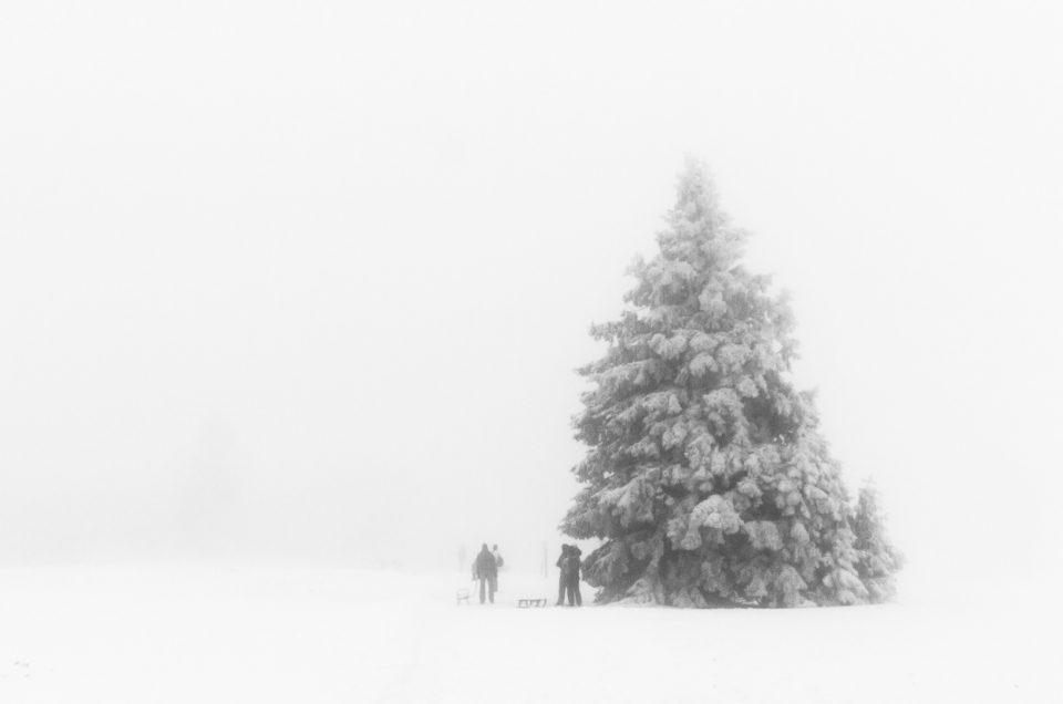 Nebel in der Astenheide
