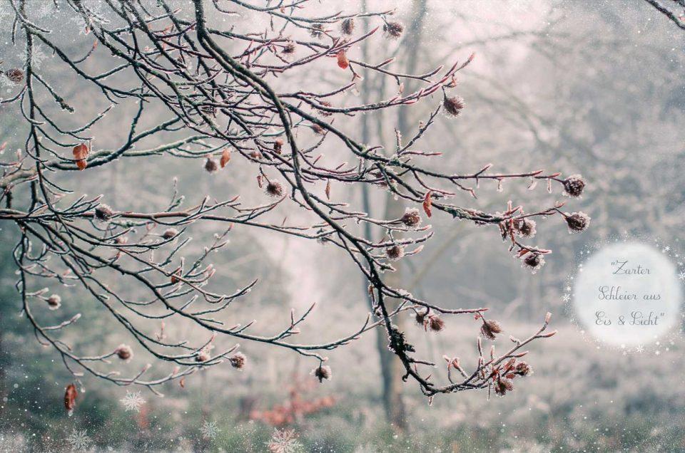 Winterweiße Zauberwelt
