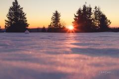 Astenheide im Winter 16