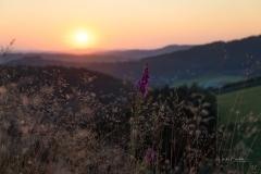 Sonnenuntergang auf dem Lingelscheid