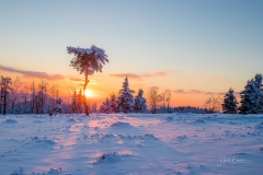Winter in der Astenheide2