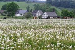 Schmallenberg-Almert im Frühjahr 1