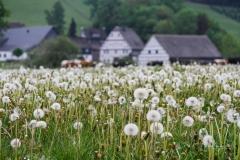 Schmallenberg-Almert im Frühjahr 2