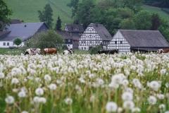 Schmallenberg-Almert im Frühjahr 3