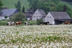 Schmallenberg-Almert im Frühjahr 4