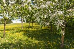 Almert im Frühjahr 3