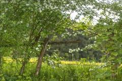Almert im Frühjahr 4