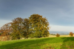 Sundern-Altenhellefeld-Herbst-18