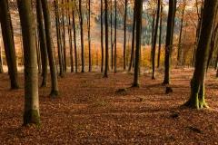 Hoher-Knochen-Herbst-22