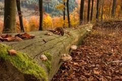 Hoher-Knochen-Herbst-24
