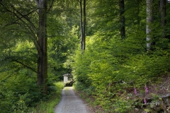 Weg zur Buchhagen-Kapelle