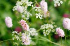 Blumen-Kraeuter-09