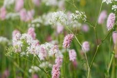 Blumen-Kraeuter-11