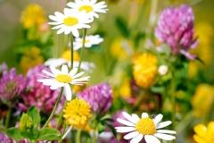 Blumen-Kraeuter-12