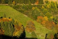 Bollerbergaussicht-Herbst-020