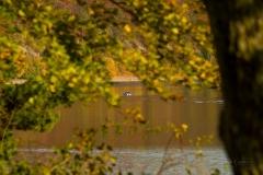 Diemelsee-im-Herbst-29