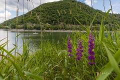 Diemelsee-im-Sommer-03