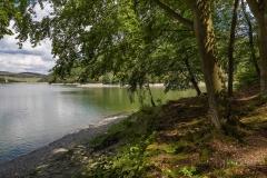 Diemelsee-im-Sommer-06