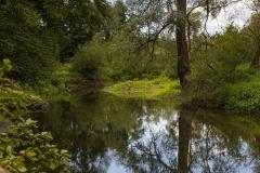 Diemelsee-im-Sommer-10