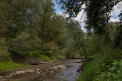 Diemelsee-im-Sommer-11