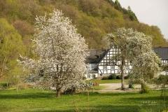 Frielinghausen-2