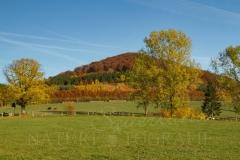 Herbstlicher Wilzenberg