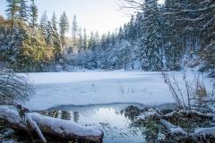 Mühlenteich im Winter