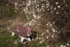 Grafschafter Frühling 8