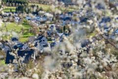 Grafschafter Frühling 1