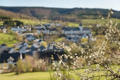 Grafschafter Frühling 3