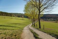 Grafschafter Frühling 12