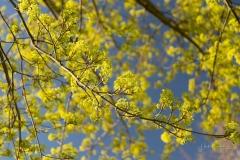 Grafschafter Frühling 15