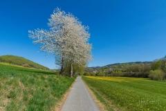 Grafschafter Frühling 16