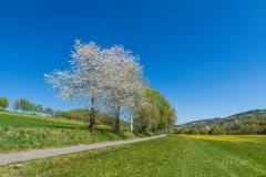 Grafschafter Frühling 17