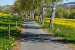 Grafschafter Frühling 18