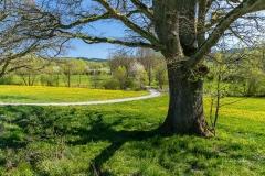 Grafschafter Frühling 19