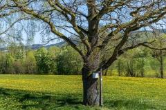 Grafschafter Frühling 20