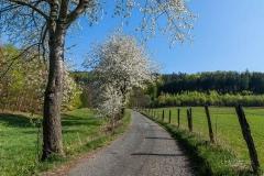 Grafschafter Frühling 29