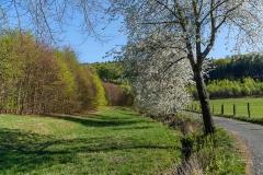 Grafschafter Frühling 30