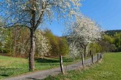 Grafschafter Frühling 31