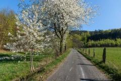 Grafschafter Frühling 32