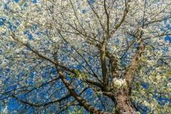 Grafschafter Frühling 33